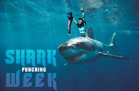 Shark Attack Meme - the truth behind the shark attack other memes carvemag com