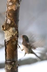40 best birdwatching images on pinterest birdwatching backyard