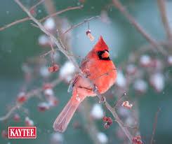 Backyard Wild Birds by 60 Best Backyard Birding Diy Bird Feeders Garden Ideas Images