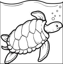 free printable swimming turtle coloring kids