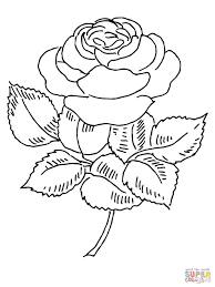 coloring pages kids blooming rose coloring page roses pages free