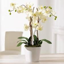 Artificial Orchids Artificial Flowers Wayfair Co Uk