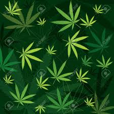 green marijuana background with leaves in different shades of