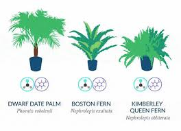 best house plants best house plants to beat pollution