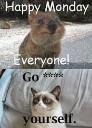 Grumpy Cat Meme Happy - pin by emilie josephine on mamma meme pinterest grumpy cat