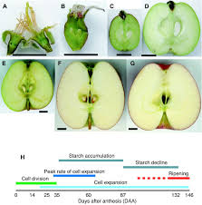 Where Is The Pollen Produced In A Flower - will we have fruit in a future without bees u2013 bug gwen