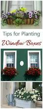 window box planters how to plant window boxes the gardening cook