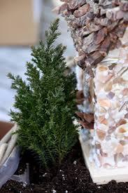 make a miniature fairy garden in a container hgtv