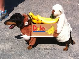 Cheap Dog Costumes Halloween Dachshund Costume Monkeys Carrying Box Bananas