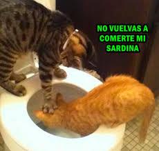 imagenes groseras de gatos fotos mira los mejores memes de gatos en el inicio de su mes www