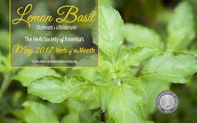 herb society of america learn herb of the month