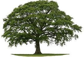 kelley s tree service