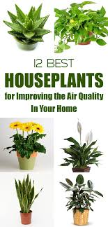 best plants for air quality best houseplants for improving the air quality in your home