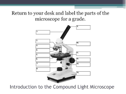 Parts Of A Compound Light Microscope Ppt Introduction To The Compound Light Microscope Powerpoint