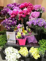 flower stores flowers florists pittsford ny rochester flower delivery