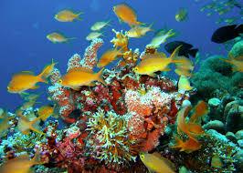 Florida snorkeling images Top snorkeling spots in the florida keys florida yacht charter jpg