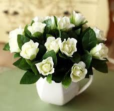 Gardenia Flower Aliexpress Com Buy Gardenia Jasminoides White Cape Jasmine
