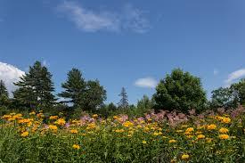 Boothbay Botanical Gardens by Coastal Maine Botanical Gardens High Strung Loner