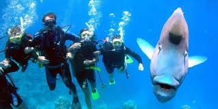 Texas snorkeling images Scuba diving lessons houston texas tx gigglin 39 marlin dive jpg