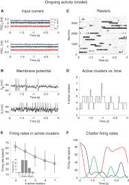 dynamics of multistable states during ongoing and evoked cortical