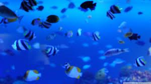 marine life uhd desktop wallpaper for ultra hd 4k 8k u2022 mobile