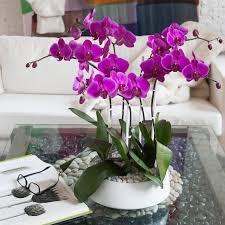 artificial orchids flowers combine with artificial orchid arrangements
