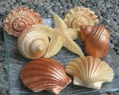 seashell soaps wing soap by bloom decorative soaps my soaps wings