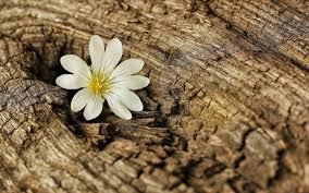 tree bark wallpaper 6829438