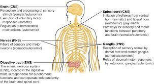 Visceral Somatic Reflex Nervous System On Emaze