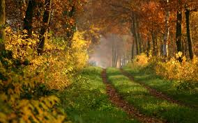 road forest autumn nature wallpapers