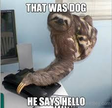 Funny Sloth Pictures Meme - funny sloth pictures