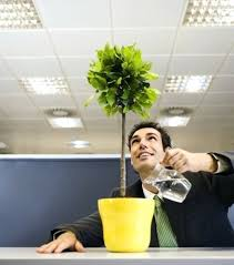 Plants For Office Desk Plants For Office Desk Feng Shui Plants For Office Desk