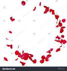 red rose petals scattered on floor stock photo 516959395