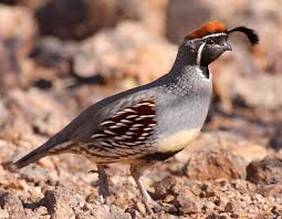 quail facts the best fact 2017