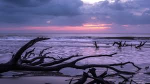 beaches purple sunset driftwood waves sea clouds lovely