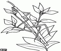 insects coloring pages printable games