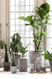 Desk Plant Best 25 Big Indoor Plants Ideas Only On Pinterest Large Indoor