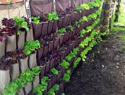 diy designing vertical gardens for tiny spaces more than green