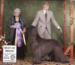 afghan hound national dog show the afghan hound club of america u0027s 77th national specialty show