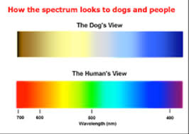 Human Color Blindness Are Dogs Really Color Blind Siowfa14 Science In Our World