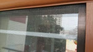 singapore prevent dengue retractable invisible mosquito insect