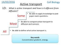 active transport new gcse by hannahradford teaching resources