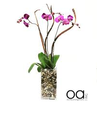 orchid delivery miami florist flower delivery by orchids arrangements inc
