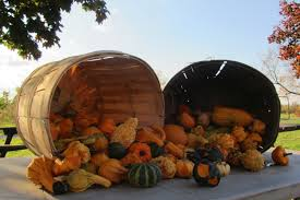 file cucurbita ornamental gourds fall display out of your gourd