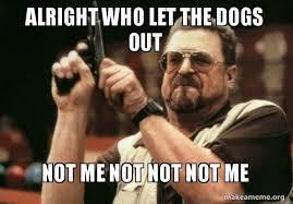 Who Let The Dogs Out Meme - alright who let the dogs out not me not not not me am i the only
