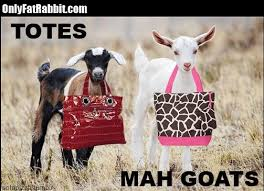 Totes Magotes Meme - totes ma goats totes mah goats meme funny goat in a bag