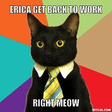 Angry Cat Meme Generator - resized business cat meme generator erica get back to work right