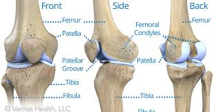 Anatomy Of Knee Injuries Guide To Knee Joint Anatomy