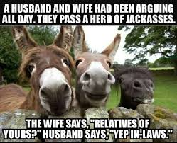 Funny Donkey Memes - funny pictures of the day 36 pics funny pictures pinterest