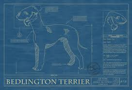 brushing a bedlington terrier a b archives page 2 of 3 animal blueprint company